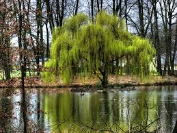 weeping willow trees creative mode minecraft java edition