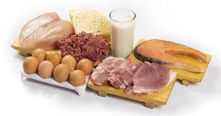 high protein foods list 23 best high protein food list
