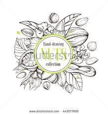 vector background line handmade sketches nuts stock vector