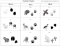 wild animals coloring pages coloringpages bunch ideas of free