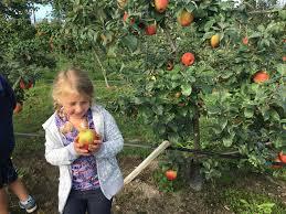 spirit halloween puyallup wa best apple picking orchards in washington state