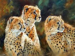 affectionate cheetahs wallpapers 105 best cheetahs images on pinterest big cats wild animals and