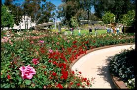 Balboa Park Botanical Gardens by Volunteer Meeting Balboa Park Rose Garden August 16 2016 Kpbs