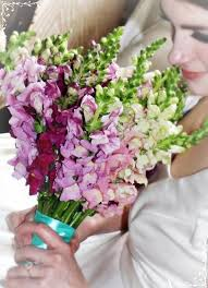 wedding flowers for bridesmaids 56 best snapdragon wedding flowers images on wedding