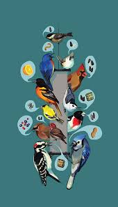 Nj Backyard Birds by Common Feeder Birds Feederwatch