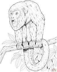 howler monkey on a tree coloring page free printable coloring pages