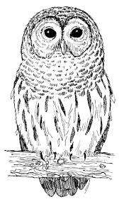 best 20 owl symbolism ideas on pinterest what do owls symbolize
