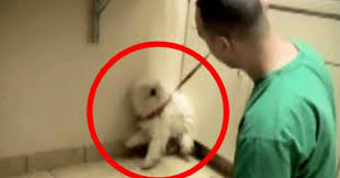 put dog to sleep dog was scheduled to be put to sleep then one hug changed everything