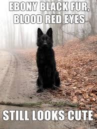 Wolf Meme - bad luck insanity wolf meme guy
