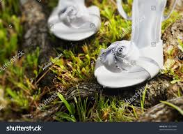 wedding shoes for grass wedding shoes tree surrounded by stock photo 55219849