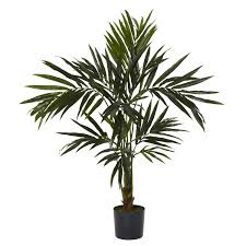 tropical house plants u2013 home design and decor