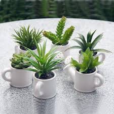 mini cactus plants best 25 small cactus plants ideas on pinterest