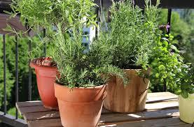 How To Make A Patio Garden Patio Herb Garden Containers Gardening Ideas