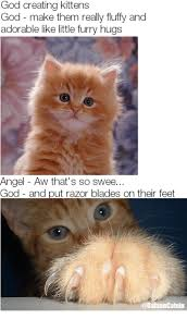 Create A Grumpy Cat Meme - 25 best memes about grumpy cat grumpy cat memes