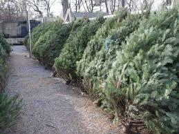 live christmas tree where to up a live christmas tree pleasanton ca patch