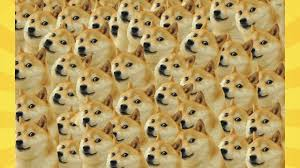 Doge Dog Meme - what is doge the history and origin of the dog meme explained youtube