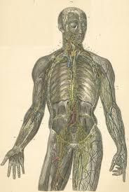 Human Anatomy Atlas Anatomy Atlases Atlas Of Human Anatomy Plate 22 Figure 1