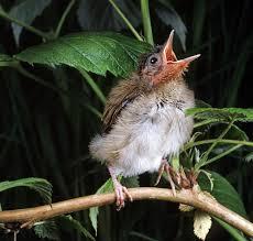 Nc Backyard Birds Excuse Me U2026what Did You Say U2013 Backyard Birds The Bird Food Store