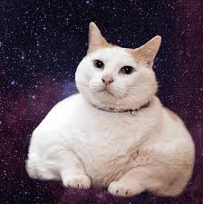 Omg Cat Meme - animated gifs of cats floating amongst galaxies designtaxi com
