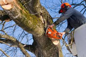 tree service tree care all trees casper wy