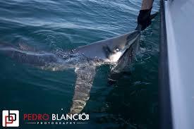 riptide shark report u2013 june 30 2016 u2013 salty cape