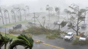 in pics toppled trees lashings of rain as hurricane maria