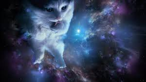 cat universe wallpaper cat in space wallpaper 1032x774 24125 high quality and