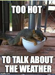 Hot Weather Meme - squirrel week sounds good to me imgflip
