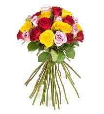 Colorful Roses Colorful Roses Recolor Your Day