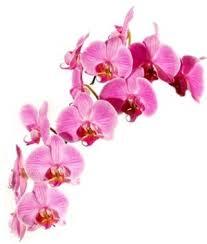 wedding flowers mississauga best 25 flowers direct ideas on zen doodle patterns