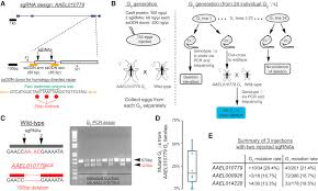genome engineering with crispr cas9 in the mosquito aedes aegypti