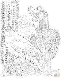 harris u0027s hawk in saguaro forest coloring page free printable