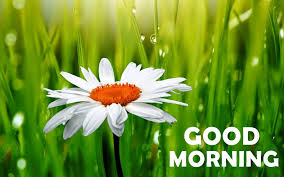 Flower Alt Code - good morning wishes with flowers pictures images page 79