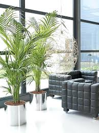 decorations plants for home decor real plants for home decor