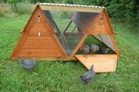 Building Backyard Chicken Coop Poultry Farming Guide Raising Backyard Chickens Building Chicken