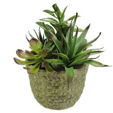 Desk Plant Northlight Decorative Artificial Mixed Succulent Arrangement Desk
