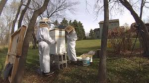 suburban beekeeper backyard beekeeping winter hive prep youtube