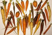 Winter Root Vegetables List - list of root vegetables wikipedia