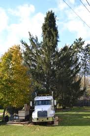 state college pa crews prep college township tree chosen for