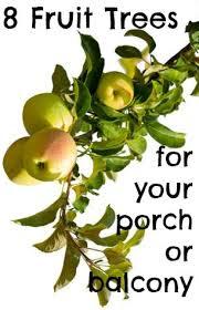 Apple Tree In My Backyard Best 25 Dwarf Cherry Tree Ideas On Pinterest Weeping Cherry