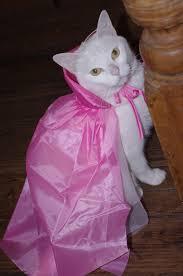 little pink riding hood cat costume beau at halloween