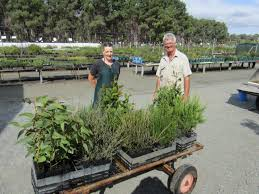 small native plants for australian gardens native plants available this easter australian native nursery