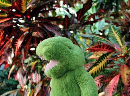 Tropical Rainforest Plant Species List - rainforest animals and insects 10 desktop wallpaper listtoday