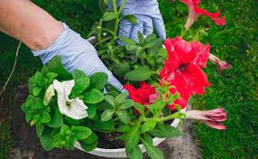 anti aphids plants zones