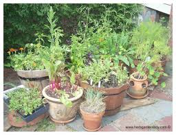 great herb container garden your herb garden with a container
