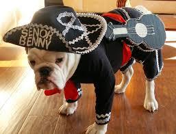 French Bulldog Costumes Halloween Hola Señor Benny Bulldog