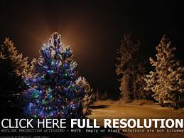 Lighted Outdoor Christmas Decorations Trees by Lighted Outdoor Christmas Decorations Sacharoff Decoration