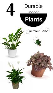 plants for the house 4 durable indoor plants for your home