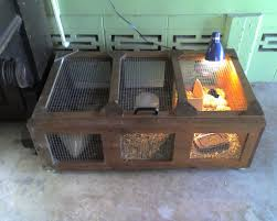 chicken brooder box australia with backyard poultry forum view