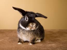 pet rabbit expect